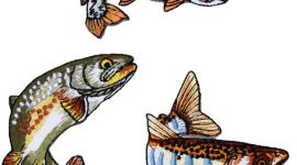 Real fish Embroidery adhering Patch